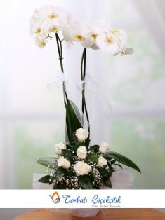 Çift Dal Orkide ve Beyaz Gül
