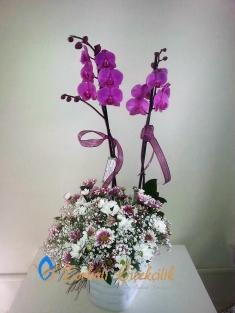 Kırçiçekli Orkidem
