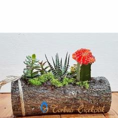 Ahşap Kütük ve Karışık Bitkiler