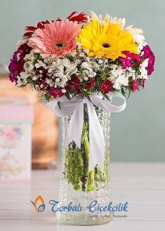 Gerbera ve Kırçiçekleri