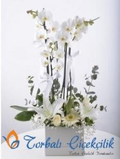 Orkide Arajmanı Sevgili Beyazım